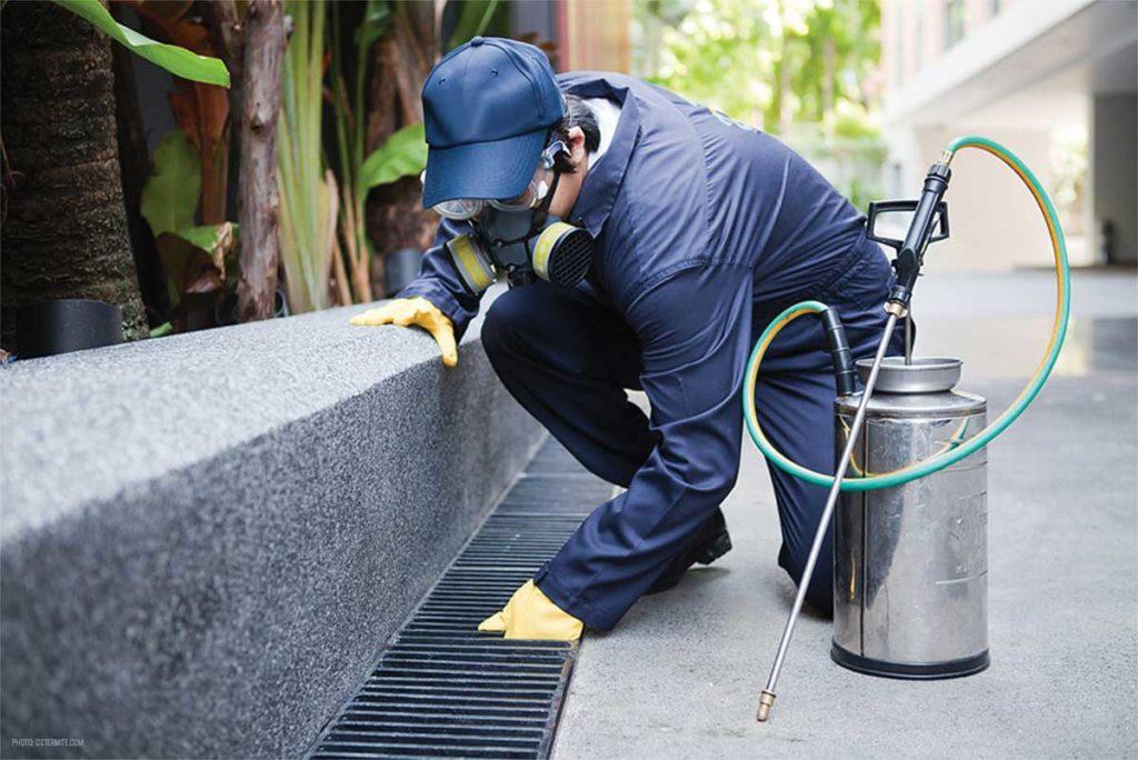 شركات رش المبيدات في الرياض