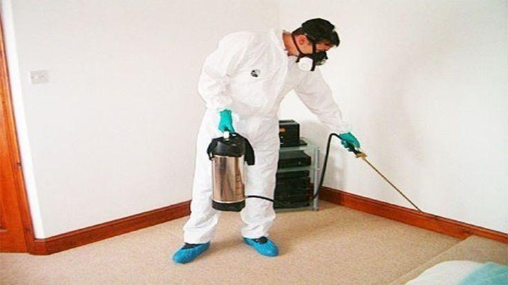 Photo of أفضل شركات رش مبيدات الحشرات بالرياض