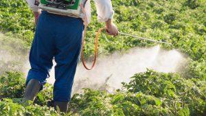 شركة لرش المبيدات الحشرية في الرياض